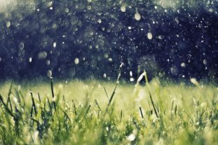 https---www.walldevil.com-wallpapers-w07-artwork-nature-rain-grass-water-drops.jpg